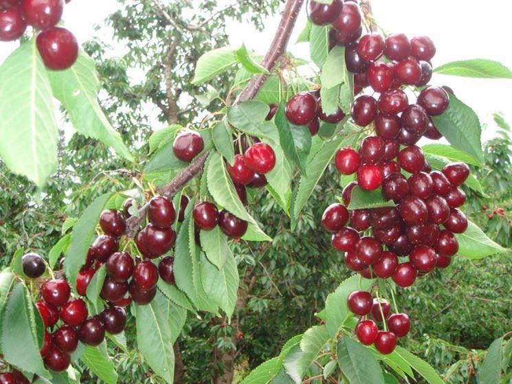 Un ramo carico di frutti