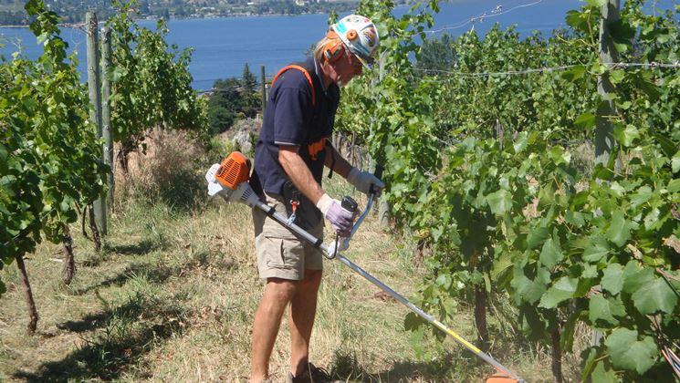 Come curare un vitigno