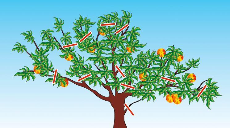 Potare gli alberi da frutto