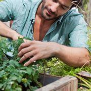 Potatura piante da giardino