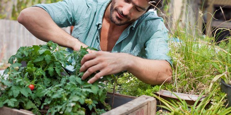 potatura piante da giardino tecnica potatura