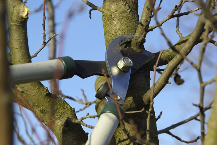 Eliminazione ramo ciliegio
