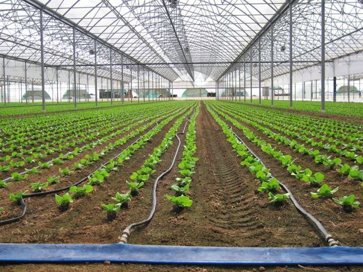 Irrigazione a goccia idraulico fai da te impianto di for Sistema irrigazione a goccia