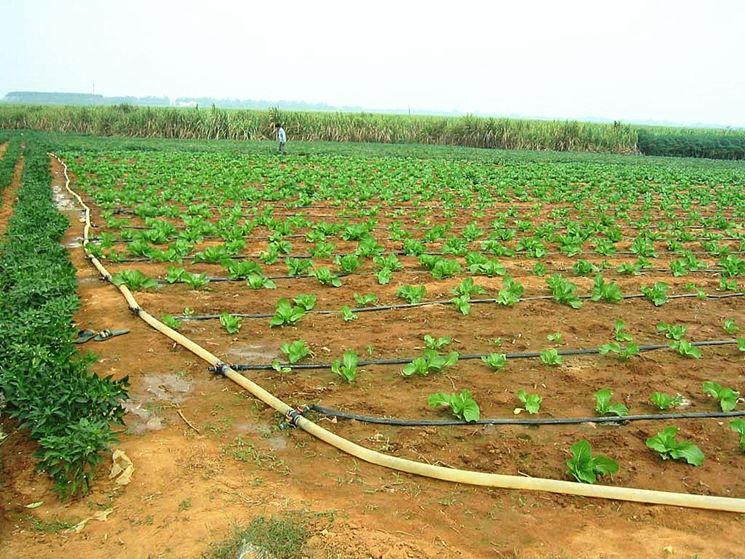 Linea di irrigazione nell'orto