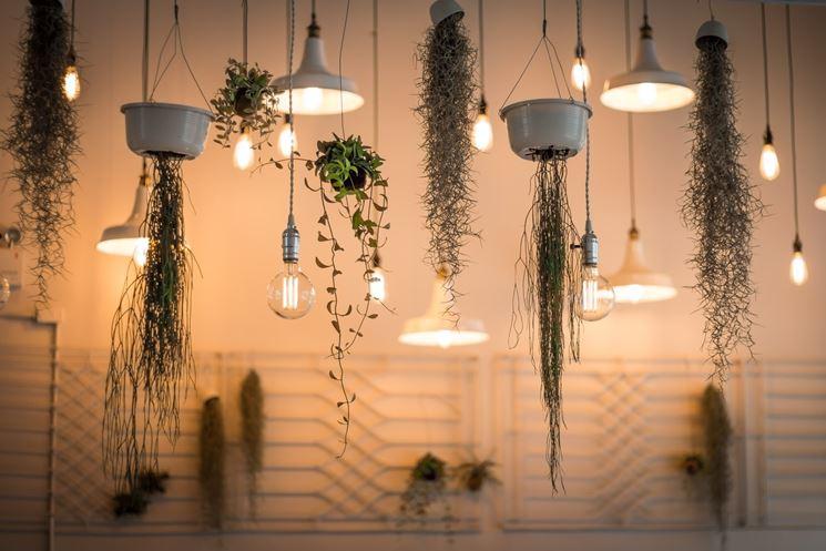 Soluzione curiosa di luci e piante