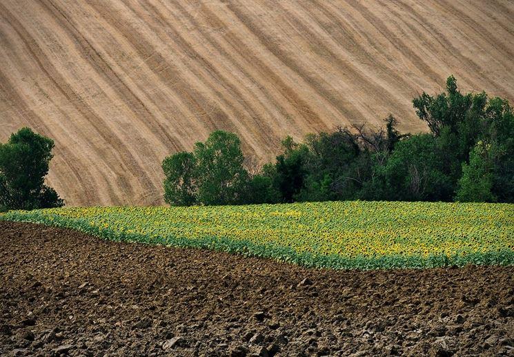 Terreno coltivabile