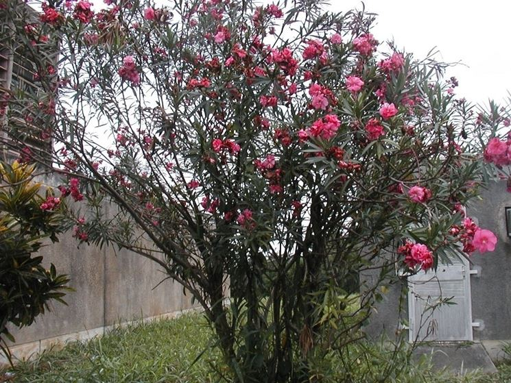 Alberi a crescita rapida alberi da giardino tipologia - Alberi particolari da giardino ...