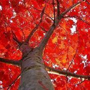 alberi a crescita rapida