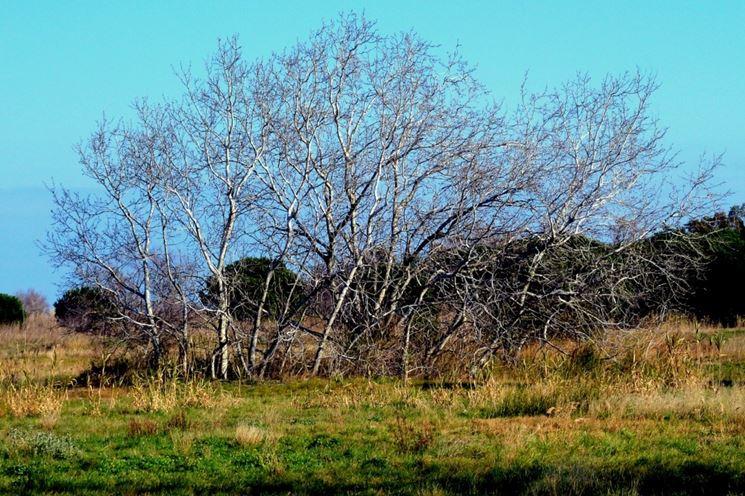 Albero a foglie caduche