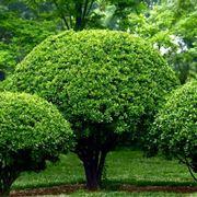 Giardino con piante e arbusti