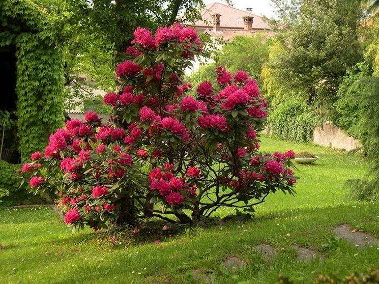 Alberi basso fusto alberi da giardino caratteristiche alberi a basso fusto - Piante da giardino alto fusto ...
