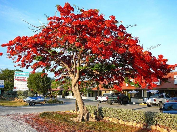 Alberi esotici alberi da giardino - Alberi sempreverdi da giardino ...