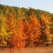 Alberi latifoglie in autunno