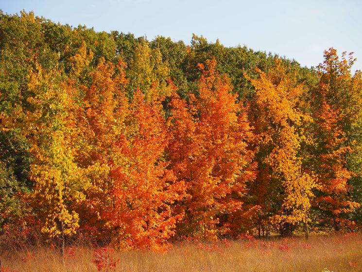Alberi latifoglie alberi da giardino alberi latifoglie - Alberi da piantare in giardino ...