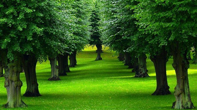 esempio di alberi