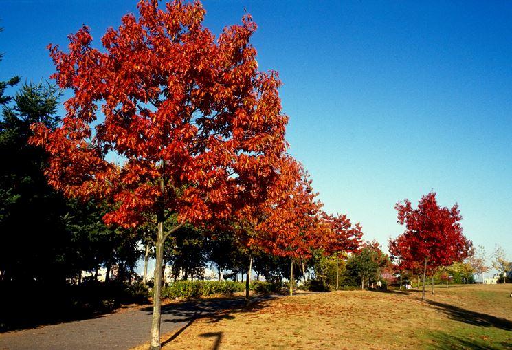Alberi alberi da giardino tipologie di albero - Alberi sempreverdi da giardino ...