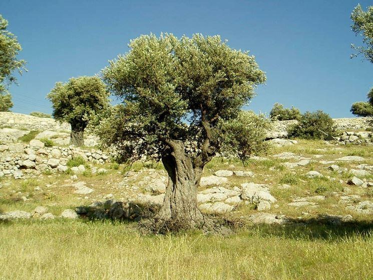Alberi alberi da giardino tipologie di albero - Alberi da giardino di piccole dimensioni ...