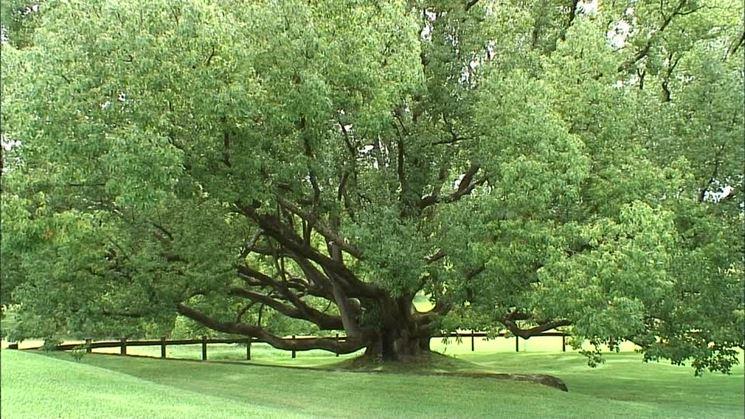 Esempio di alberi caducifoglie