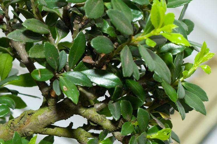 Particolare delle foglie