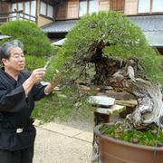 La cura di un bonsai