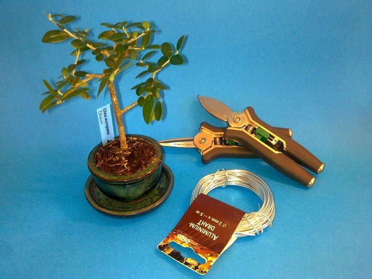 Strumenti per curare il bonsai di olivo