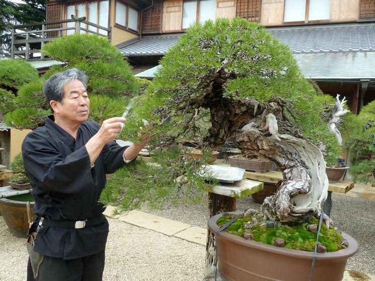 Uomo che cura un bonsai