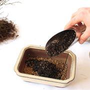 Preparazione di terreno per bonsai