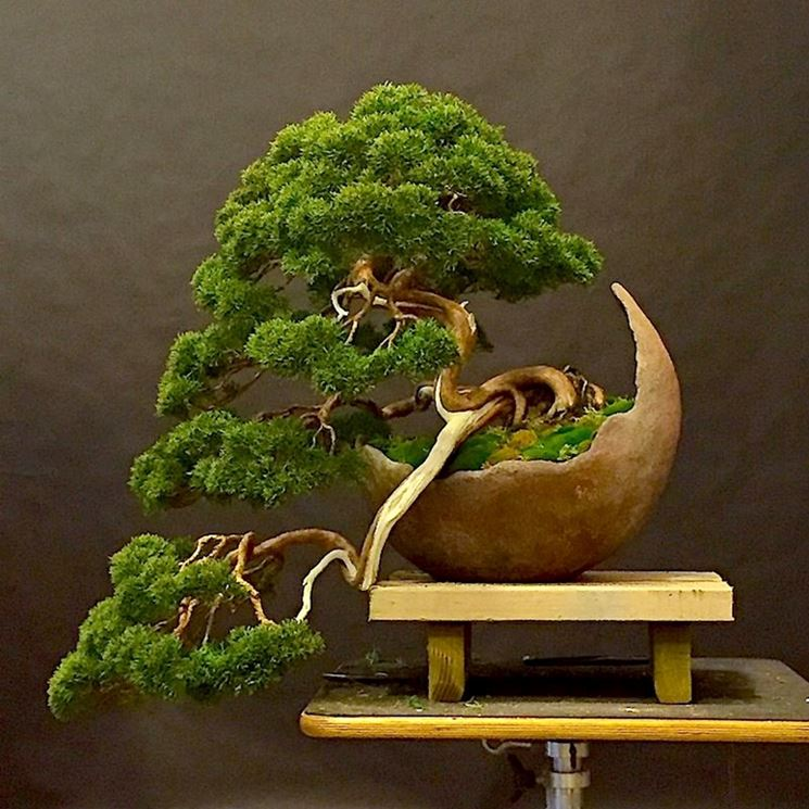Vaso per bonsai originale