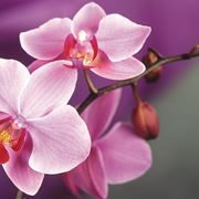 Fioritura rigogliosa a seguito di concime orchidee
