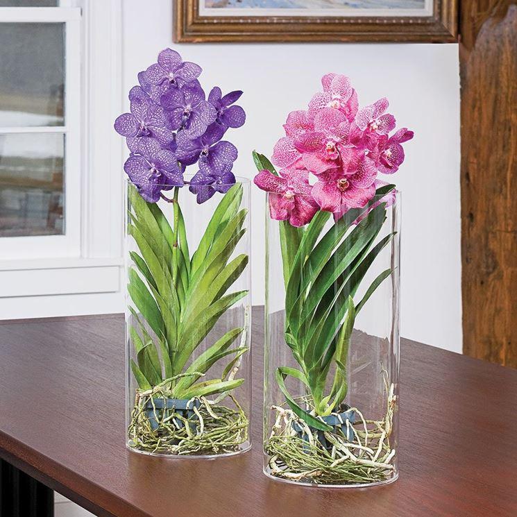 Le Orchidee Vanda nel vaso