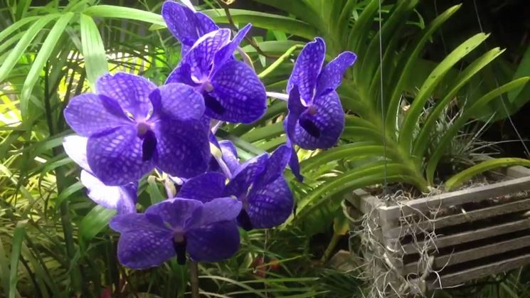 Orchidee habitat