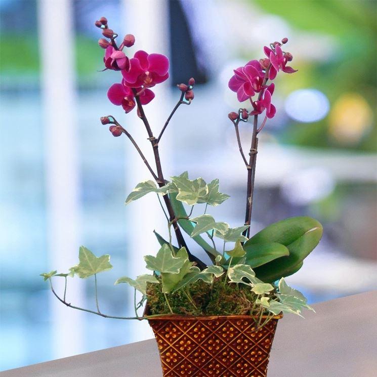 Orchidee vaso