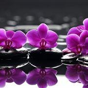 Orchidee acqua