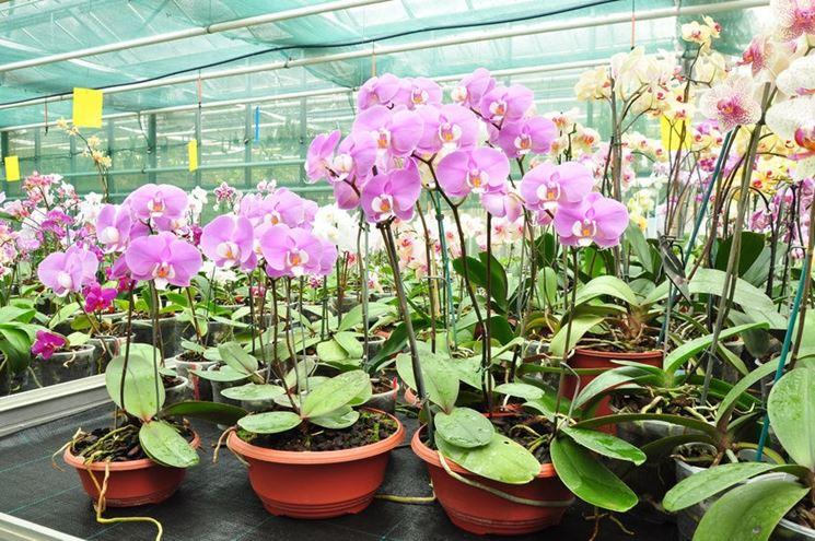Esempio di serra per orchidee