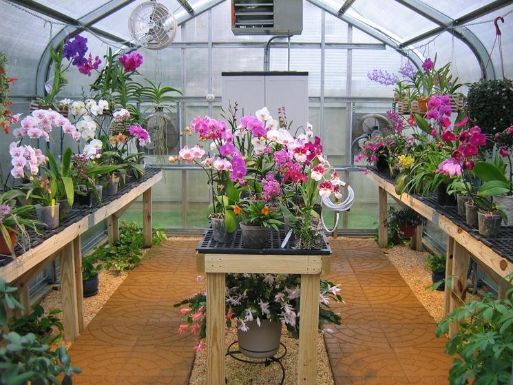 serra per orchidee