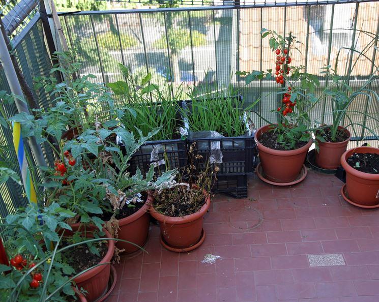Coltivare l 39 orto orto sul balcone come coltivare l for Piantare piselli