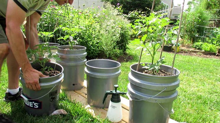 Pomodori coltivati in contenitori metallici