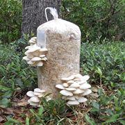 funghi coltivazione