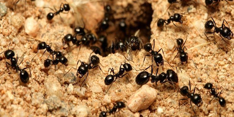 L'accesso di un formicaio