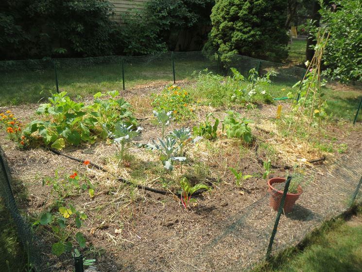 Orto a settembre in giardino
