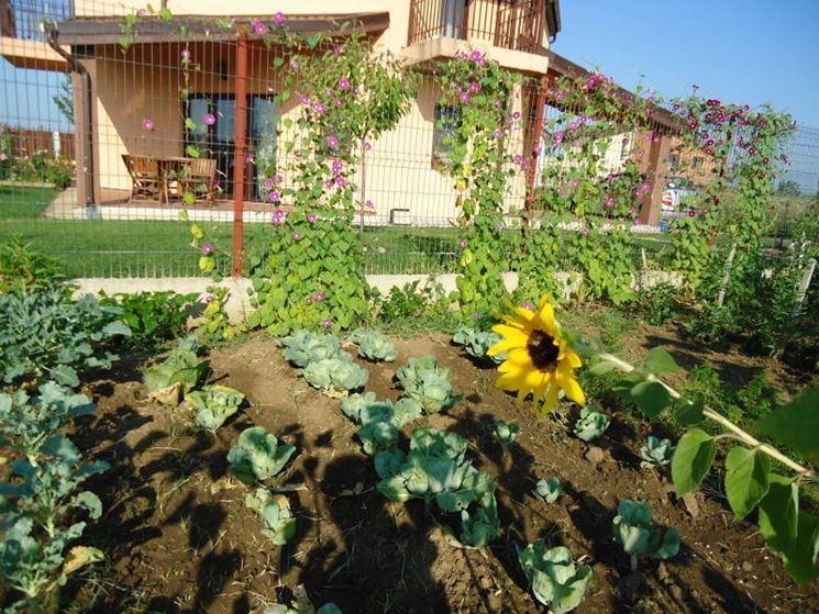 Orto in giardino a settembre