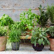 Vasi di piante aromatiche