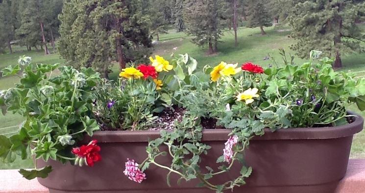 Fiori da vaso piante appartamento variet fiori for Piante da vaso perenni
