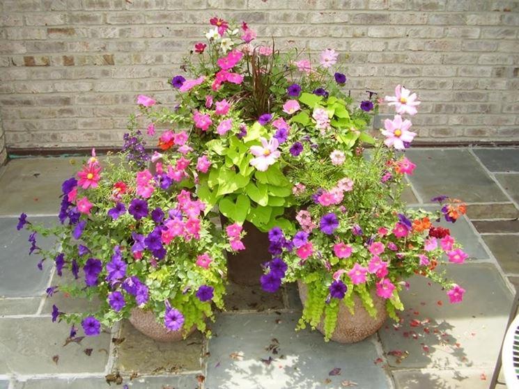 Fiori da vaso piante appartamento variet fiori for Fiori da vaso