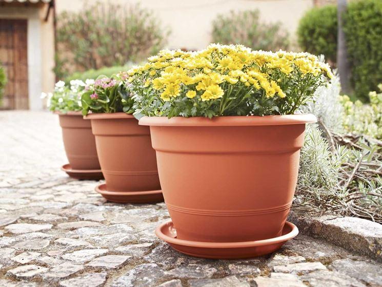 Fiori da vaso piante appartamento variet fiori for Ortensie in vaso