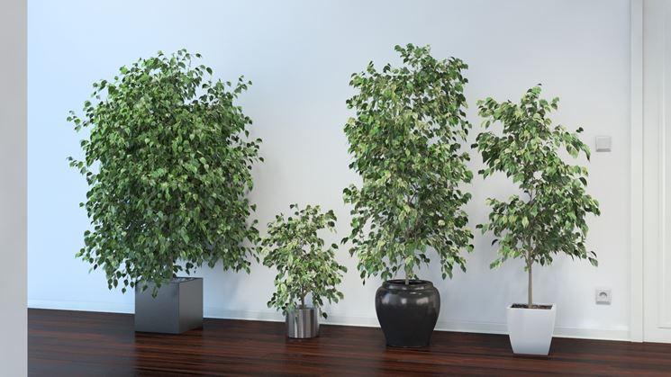 Fiori e piante - Piante Appartamento - Scegliere piante e fiori per ...