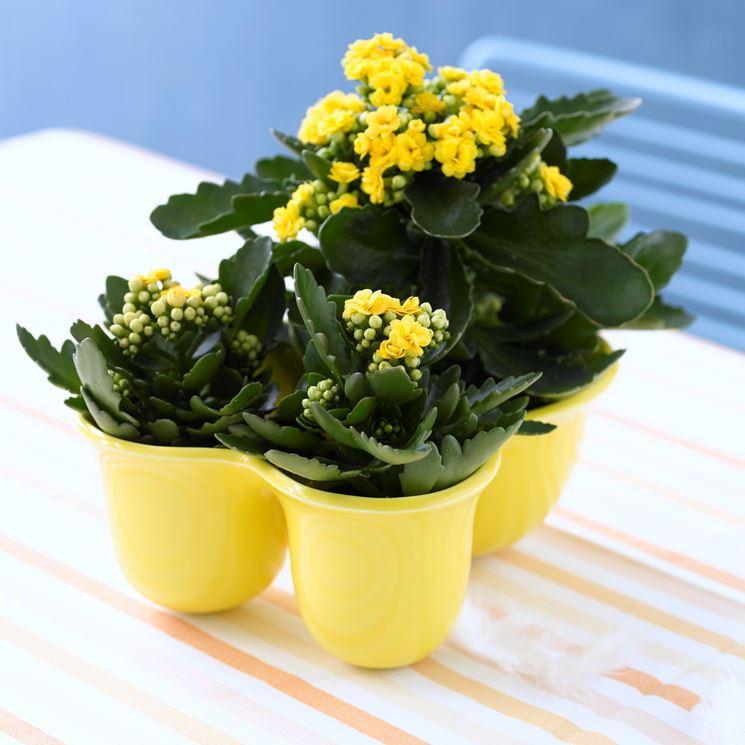 Fiori e piante - Piante Appartamento - Scegliere piante e ...