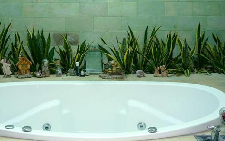 Piante in bagno piante appartamento pianta bagno - Piante da bagno ...