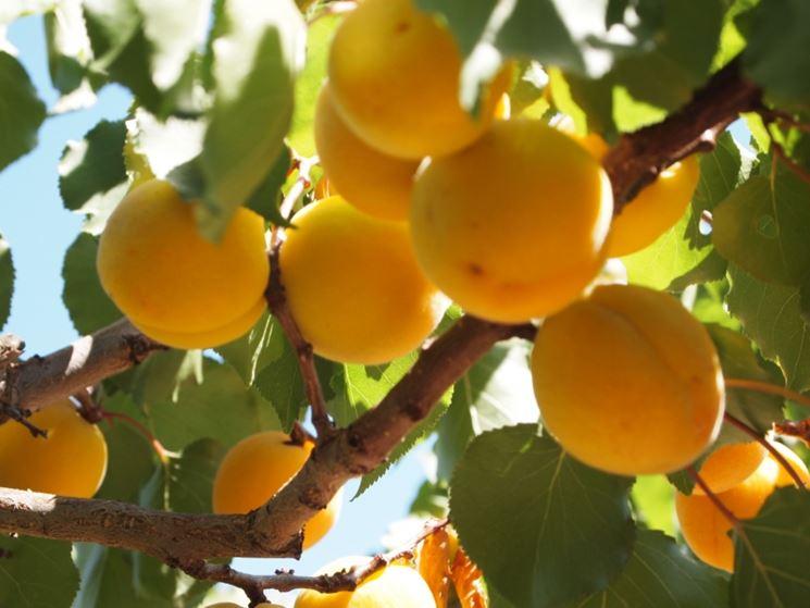 Alberi da frutto piante da frutto alberi che fanno frutti - Calendario trattamenti piante da frutto ...