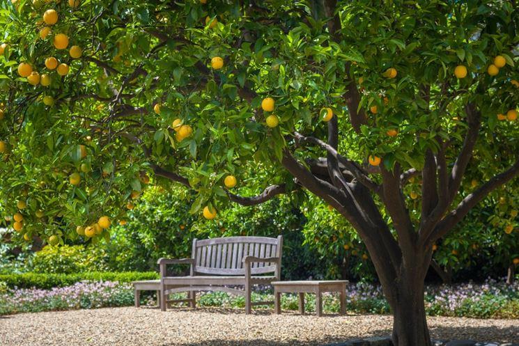Alberi da frutto piante da frutto alberi che fanno frutti - Alberi frutto giardino ...